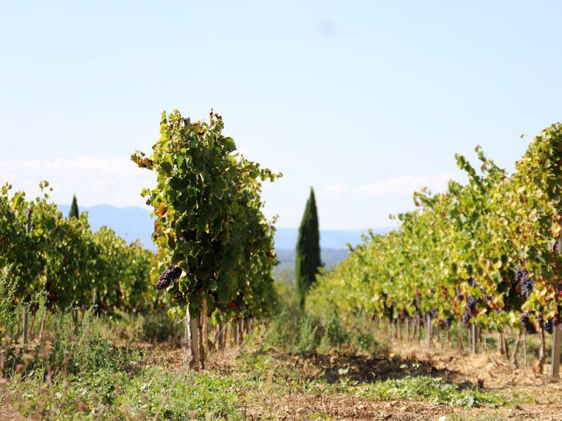 Environs de Ardèche